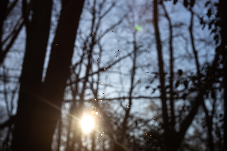 Forest - Voigtländer Septon 50mm f2
