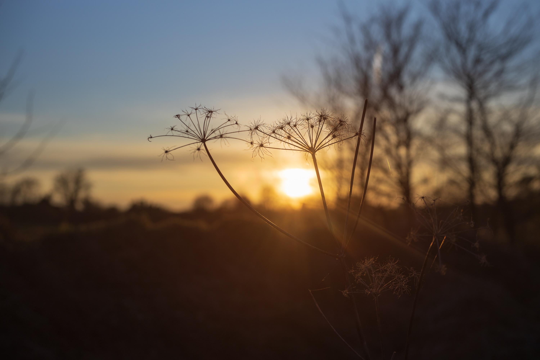 Sunset - Voigtländer Septon 50mm f2