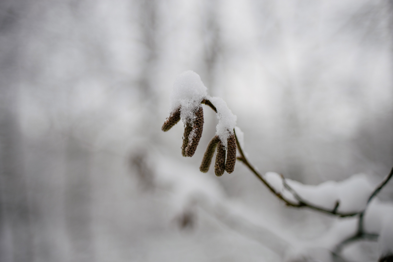 Iced over bud